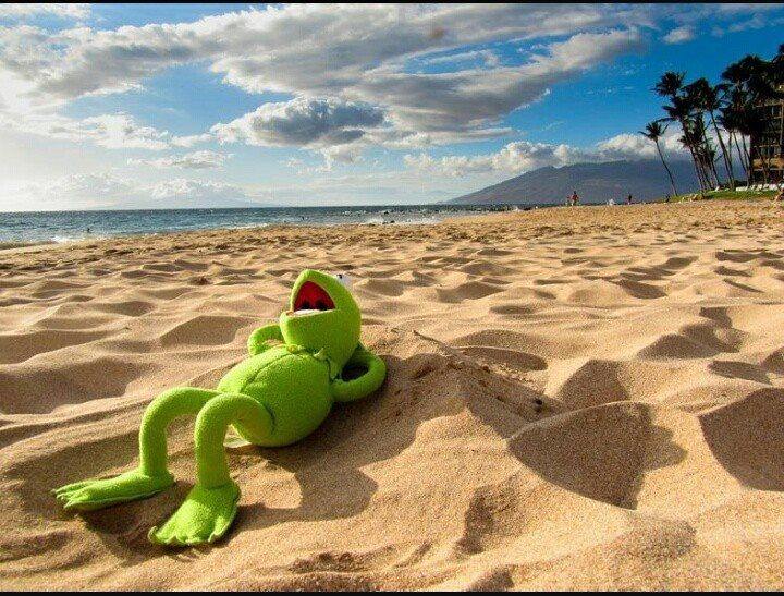 rana gustavo vacaciones